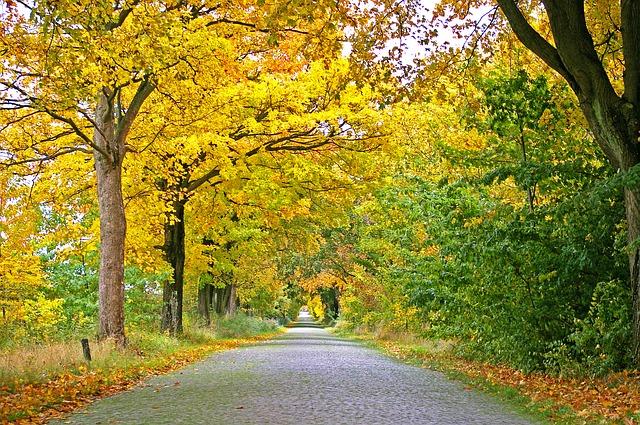 autumn-1010358_640