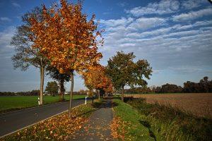 autumn-73054_640