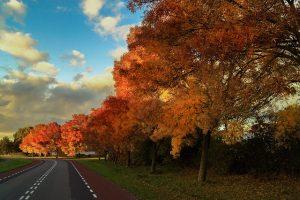 fall-535244_640